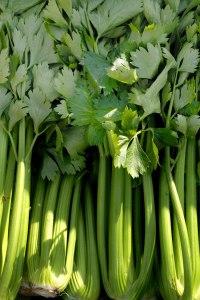 celery_utah_tall